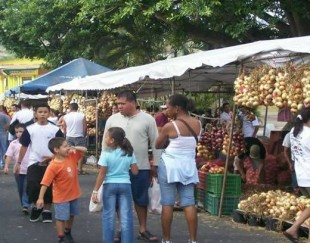 Cebolleros darán a conocer sus productos durante este fin de semana.  Prensa MAG.